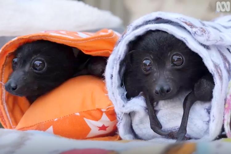 Baby Bat Wraps