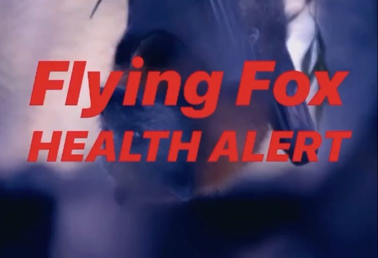 Flying Fox Health Alert