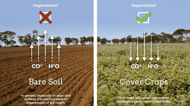Bare Soil Degenerative Cover Crop Regenerative